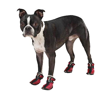 dogs-in-boots